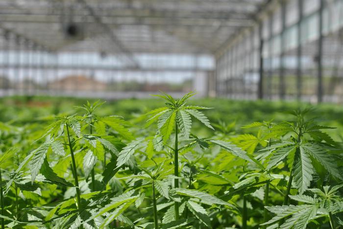 Borsa: cannabis guarda a piazza Affari